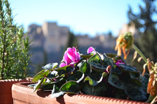 Solar Montes Claros: They had wonderful flowers (La Alhambra is in the background)