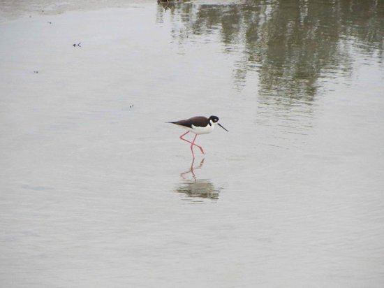 Laguna Madre Nature Trail : Not sure of species