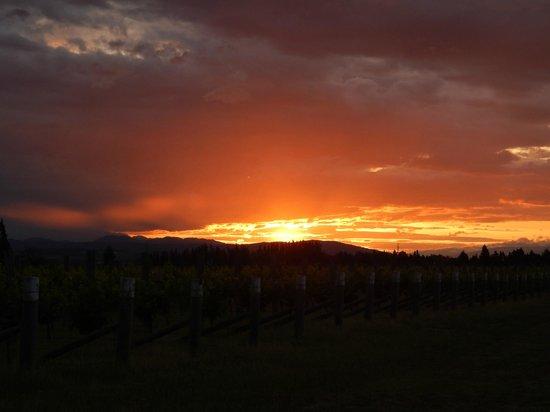 Marlborough Vintners Hotel: Vineyard sunset