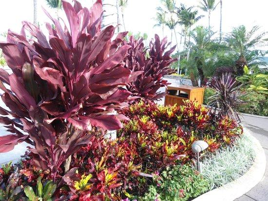 The Ritz-Carlton, Kapalua: Gardens