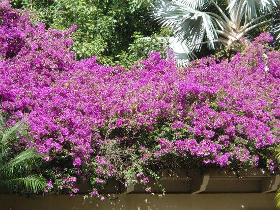 The Ritz-Carlton, Kapalua: Beautiful garden flowers