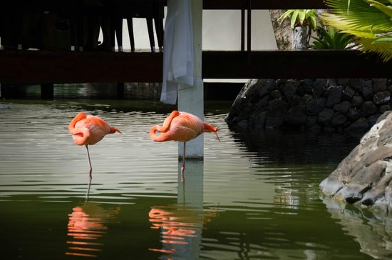 Paradisus Punta Cana: Flamingos, near the Italian restaurant.