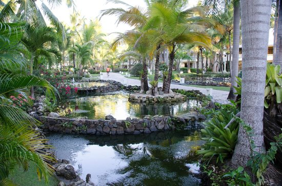 Paradisus Punta Cana Resort: Eco Pond, in front of B10, on path to beach.