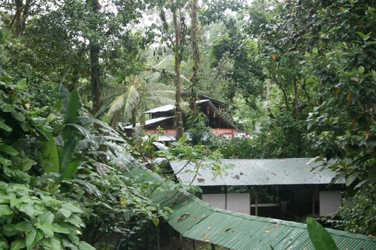 Chilamate Rainforest Eco Retreat: View from Jungle Lodge