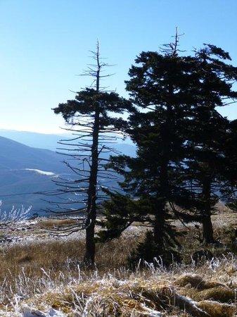 Whitetop Mountain: Mountains as far as you could see...........
