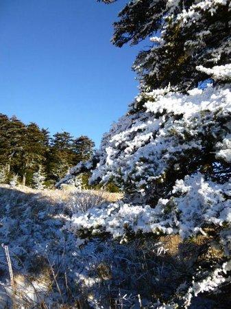 Whitetop Mountain: Frozen pines..........