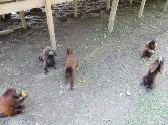 The Monkey Island: Mangos are delicious!
