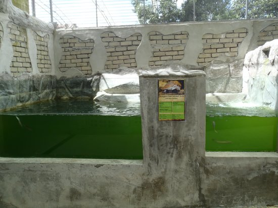 Bukit Gambang Resort City: Dirty water 2