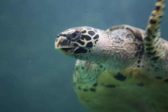 National Mexican Turtle Center: Sea Turtle
