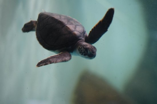 National Mexican Turtle Center: Juvenile
