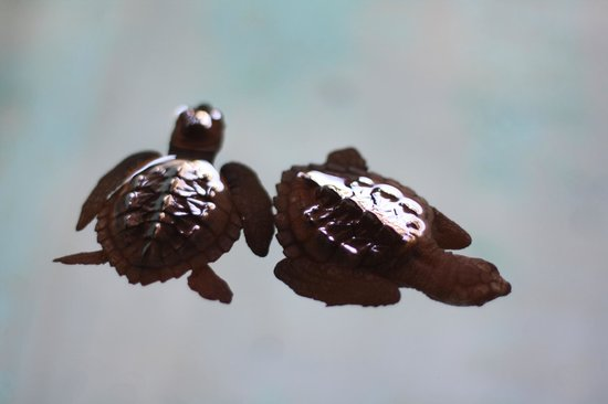 National Mexican Turtle Center (Centro Mexicano de la Tortuga): Babies at the hatchery