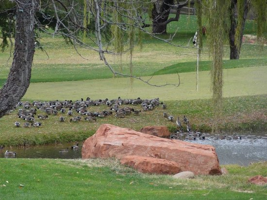 Poco Diablo Resort: golf course ducks