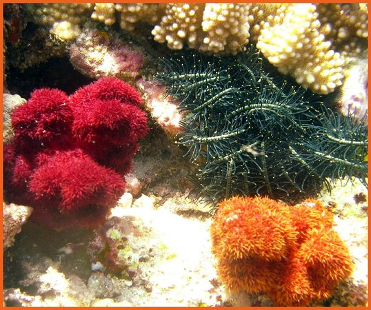 Dolphin Bay Divers Retreat: Reef Color ~