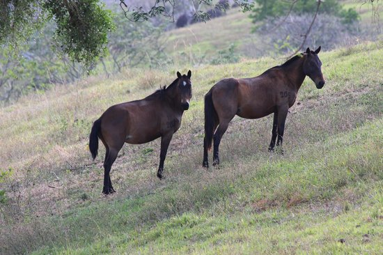 Hotel Borinquen Mountain Resort: horses