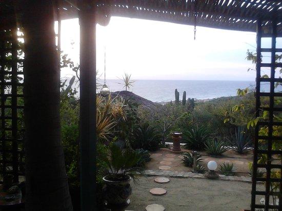 Villa del Faro: Flora