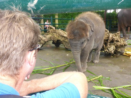 Elephant Safari Park & Lodge: The new 9 month old Baby Elephant