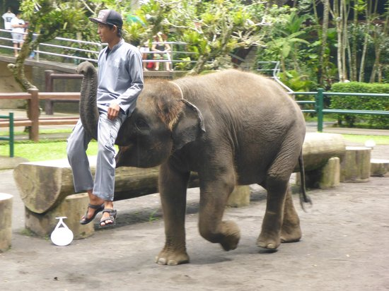 Elephant Safari Park & Lodge: Part of the Show