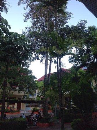 Club Coconut Resort : club coconut
