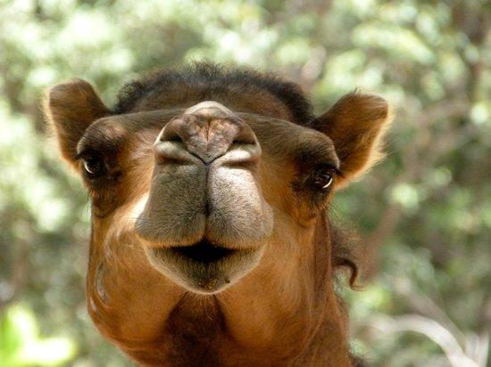 Australia Zoo: Looks like someone I know
