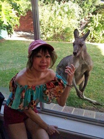 The Grampians Motel & The Views Restaurant: The resident kangaroo says hello at breakfast-time