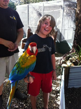 The Parrot Place : Julien and Elmo!