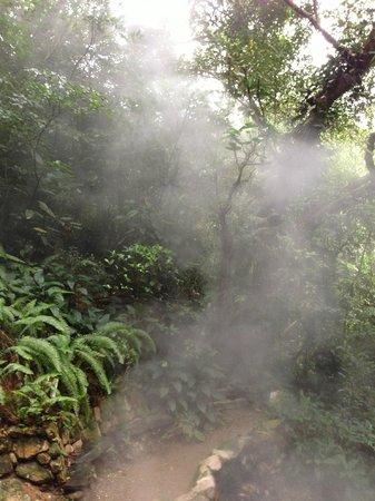 Luna Jaguar Hot Spring: raising vapor from the springs