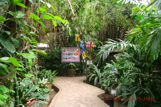 hidden garden pic 5 - Hidden Garden