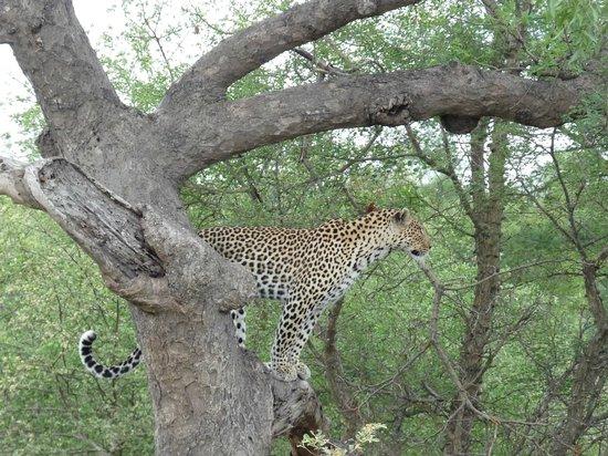 nThambo Tree Camp : #5 of the Big Five