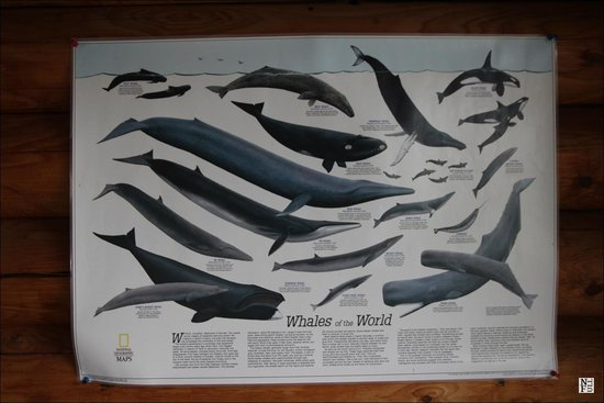 Wings Over Whales: Whales of the world
