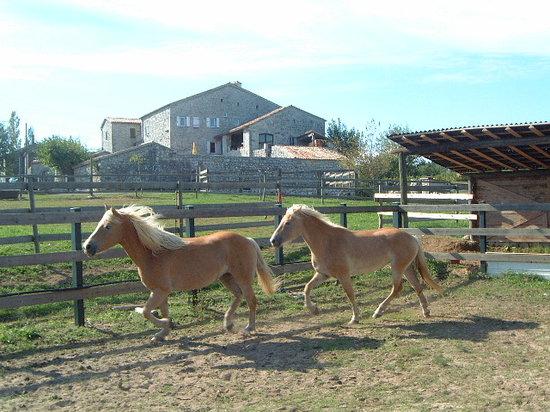Mas Saint-Alban : chevaux