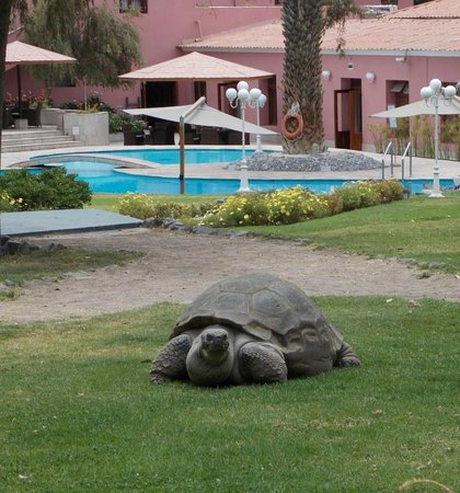 Hotel Libertador Arequipa: Juanita la tortuga en los jardines del Hotel