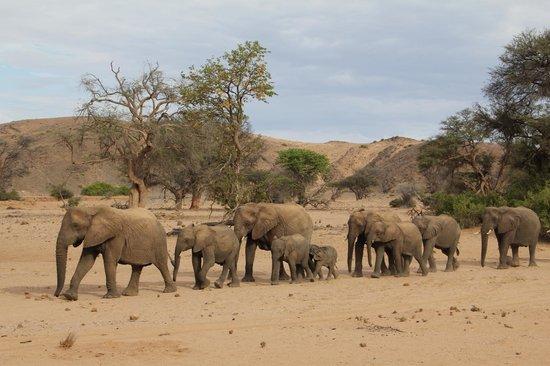 Camp Kipwe: Elephants on the elephant tracking excursion