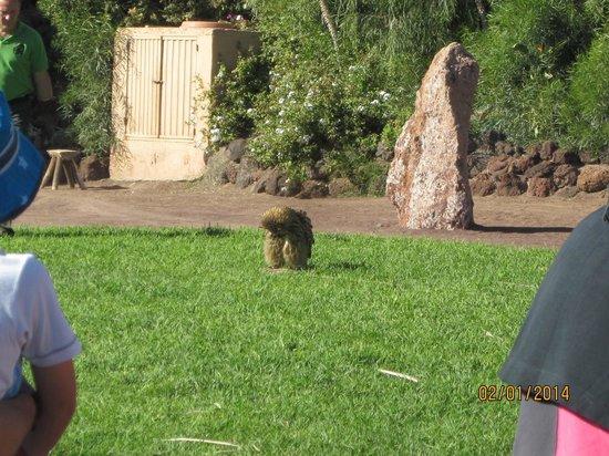 Stella Canaris Zoo: Vogel Show