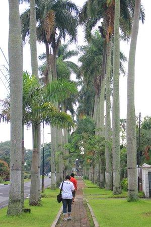 Wisma Jasa Tirta Ijen Heritage: Boulevard Jalan Ijen di depan Wisma yang tenang asri