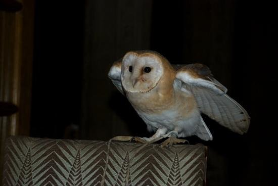 Bovey Castle Hotel: owl about that!