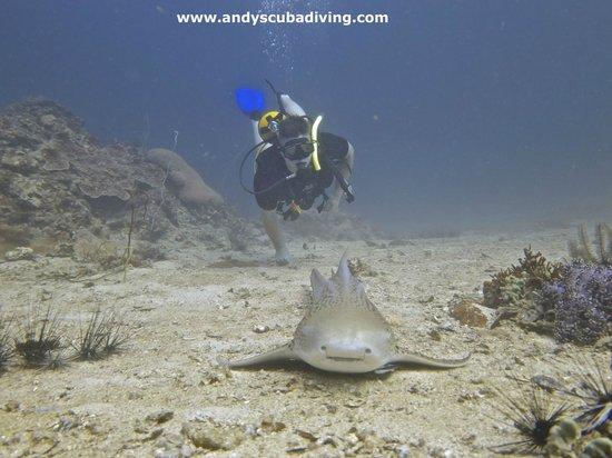 Andys Scuba Diving Phuket: Me and Mr Leopard Shark