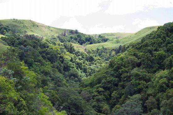 Drakensberg Sun Resort : Blue Grotto forest