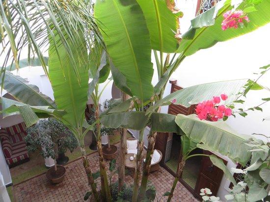 Riad Les Bougainvilliers: An interior garden