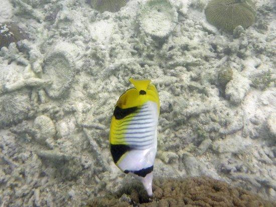 Baros Maldives: snorkle