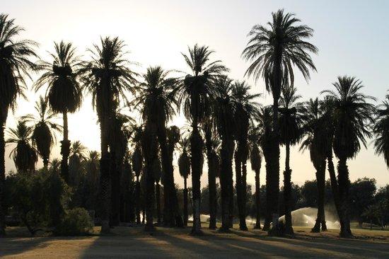 Furnace Creek Inn and Ranch Resort: palmeraie