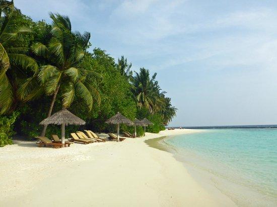 Baros Maldives : playa