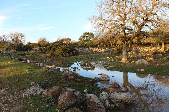 Parco della Giara Tuili