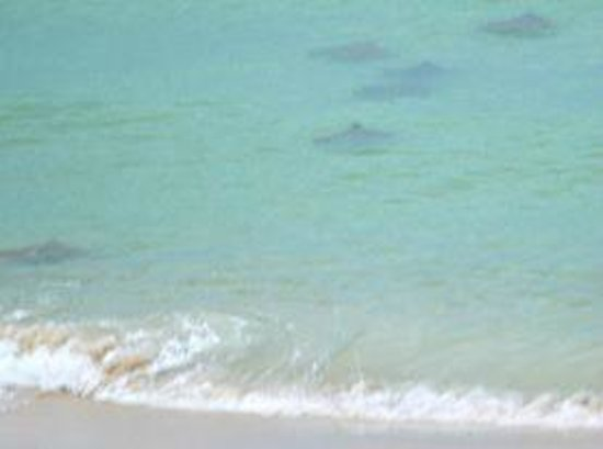 Palmetto Inn & Suites : Manta rays