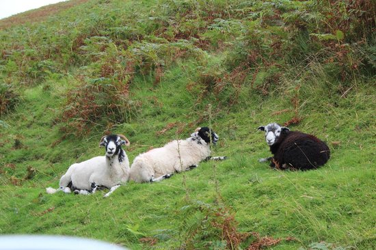 "Buttermere: More ""Wildlife"""