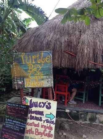 Turtle Bay Bakery & Cafe: turtle bay cafe and bakery