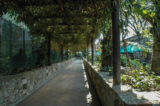 Hotel Museo Spa Casa Santo Domingo : Walkway to reception.