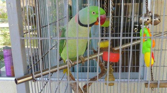 Q Bungalows: Leur perroquet