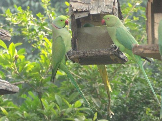 Lutyens Bungalow: Parakeets in the garden
