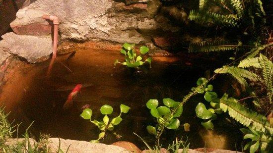 El Tucan: Tucanes y peces!!!