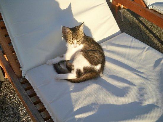 Amathus Beach Hotel Rhodes: The smallest kitten